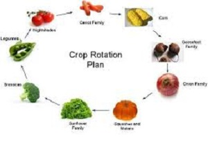 Rotate Crops