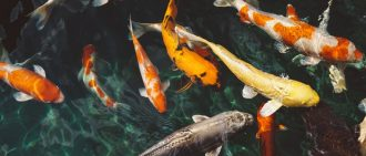 can humans take fish antibiotics