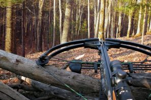 The 5 Best Crossbow Under 800 (Check These Options Out!)