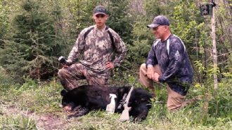 What is the Best Camo for Bear Hunting
